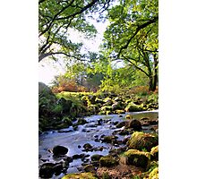 'down by the river' Photographic Print