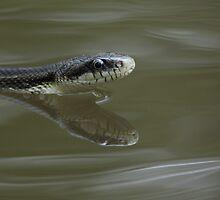 Water Snake by William C. Gladish