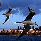 """""""Terning to Port""""-Yamba NSW by Mike Larder"""