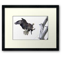 Landing Location - American Bald Eagle Framed Print