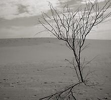 Lonely in the Desert by courteney rodda