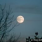 Mystical Moon by GraceNotes