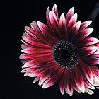 Beauty in the Dark... by Kasey Cline