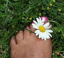 Daisies Between Your Toes by Lynn  Gibbons