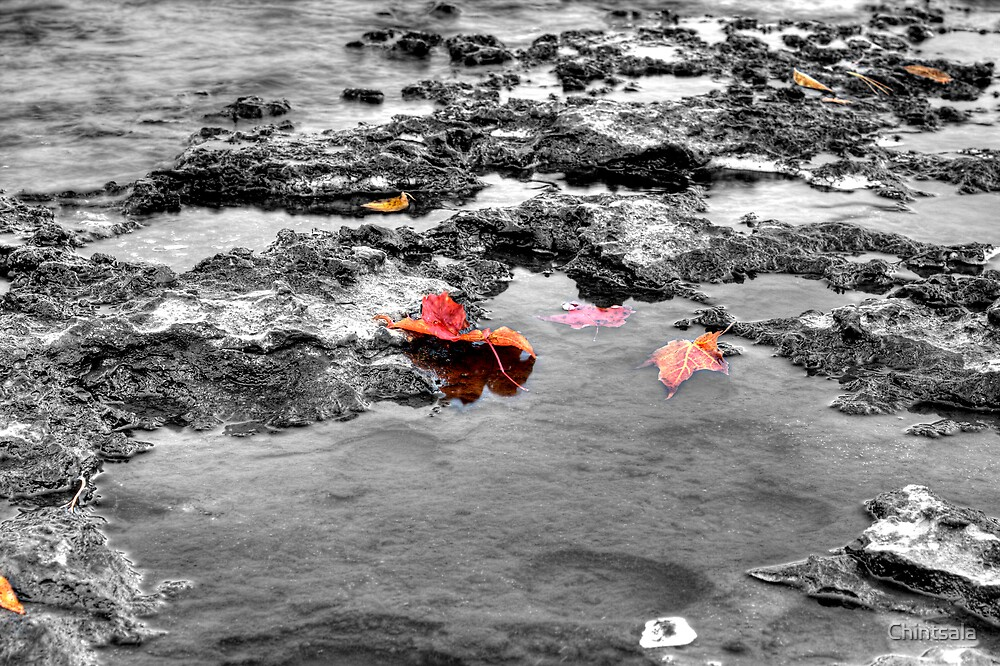 Just Leaves by Chintsala