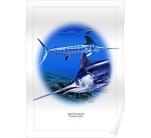 WHITE MARLIN POSTER 1 Poster