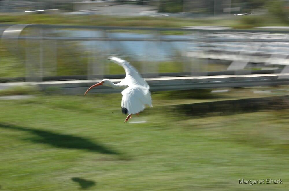 Running Wheels Down by Margaret  Shark