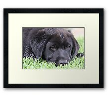 Sleepy 'Butch' Framed Print