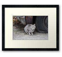 Grey Stray Framed Print