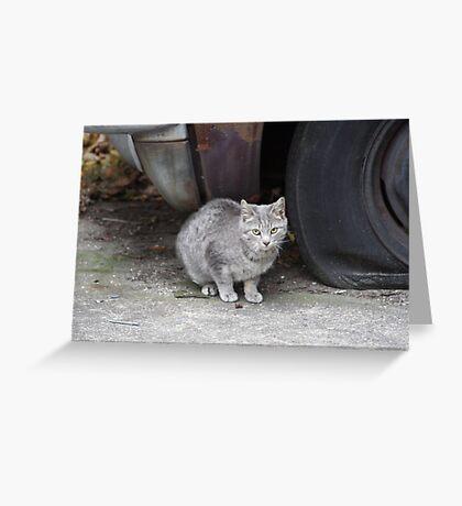 Grey Stray Greeting Card