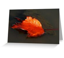 Red Maple Leaf Tea  Greeting Card