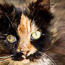 Kitten by Josie Eldred