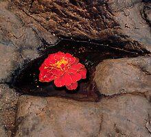 Bloom by Yuri Lev