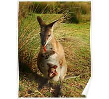 Wallaby and her Joey Poster