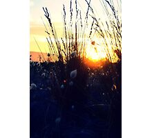 Where the bunny tails grow Photographic Print