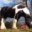 Paripa (a magnificient horse) by zumi
