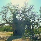 Prison Boab Tree, Near Wyndham. Kimberleys.WA. by lib225