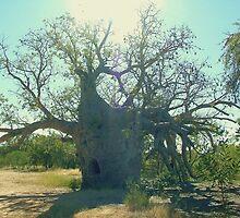 Prison Boab Tree, Near Wyndham. Kimberleys.WA. by Liz Worth