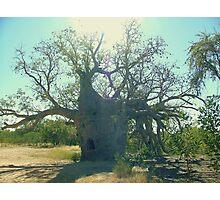 Prison Boab Tree, Near Wyndham. Kimberleys.WA. Photographic Print