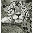 Leopard by Tony Sturtevant
