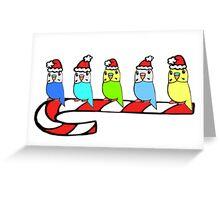 Budgies- Christmas Greeting Card