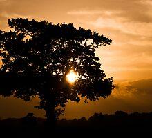 Safari Sunset by Kylzaw