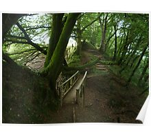 forest pathways in lydford gorge Poster