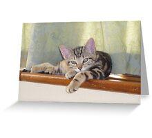 lazing kitten Greeting Card