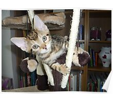 climbing kitten Poster