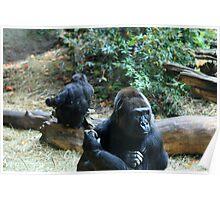 Gorillas Poster