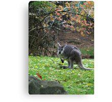 wallaby Canvas Print