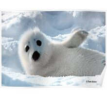 a Cute Seal Pup Poster