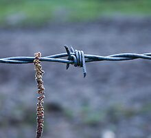 Barbed Wire by JM-Photography