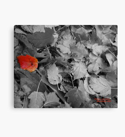 Hello, My Name Is Leaf Canvas Print
