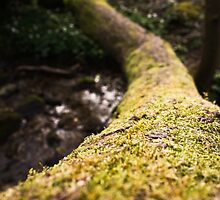 Tree by JM-Photography