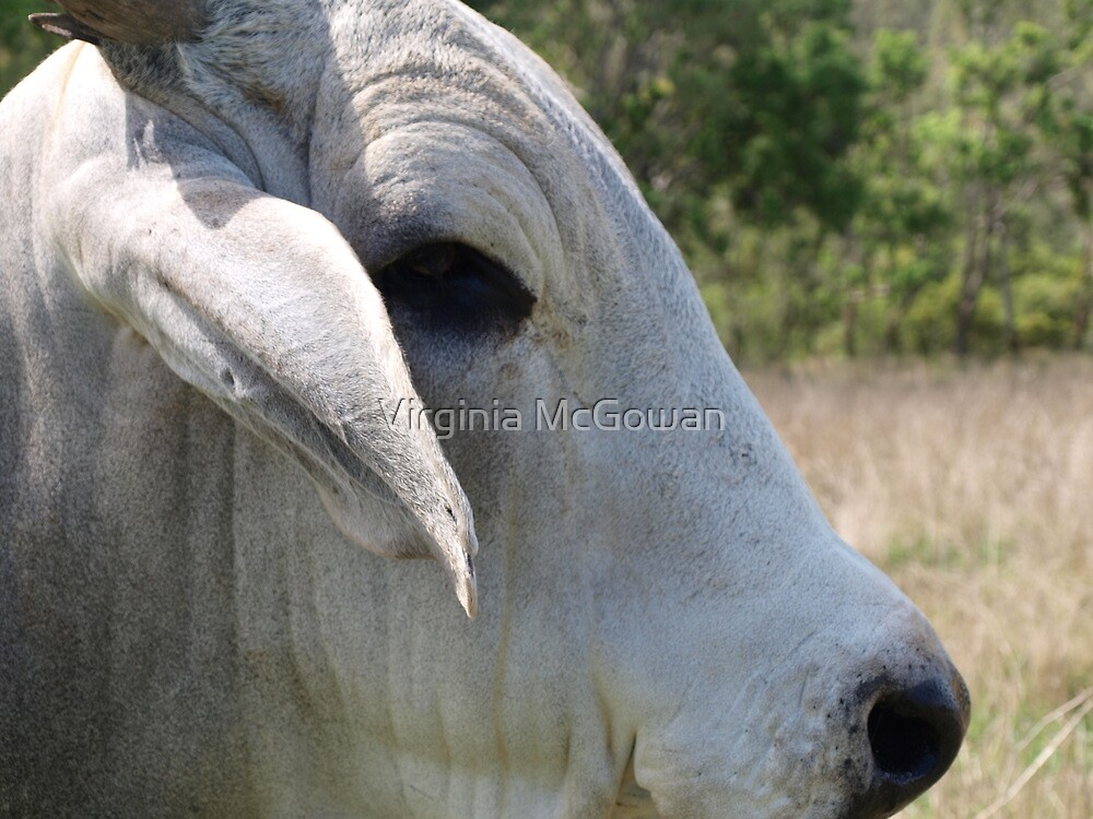 Ferdinand, Up Close and Personal. by Virginia McGowan