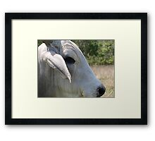 Ferdinand, Up Close and Personal. Framed Print