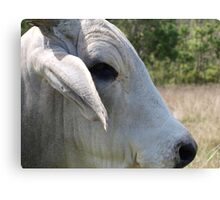 Ferdinand, Up Close and Personal. Canvas Print