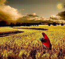 Golden Field by Katy Breen