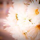 Flowers by celinebelle