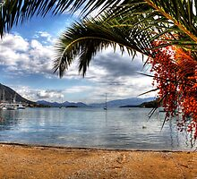 Nidri Harbour Framed By Palm Tree  by Paul Thompson Photography