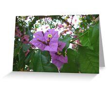 Purple blooms Greeting Card