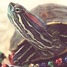 Vintage Christmas Turtle by angelandspot
