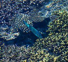 Tropical fishes in the Maldives, Laccadivian Sea by Atanas Bozhikov NASKO