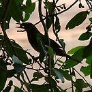 Pássaro em horário de almoço - Silhueta. by AluisioRibeiro