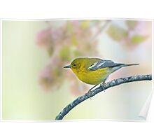Tiny Pine Warbler Poster