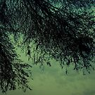 """""""Trees are the earth's endless effort to speak to the listening heaven"""" by manumint"""