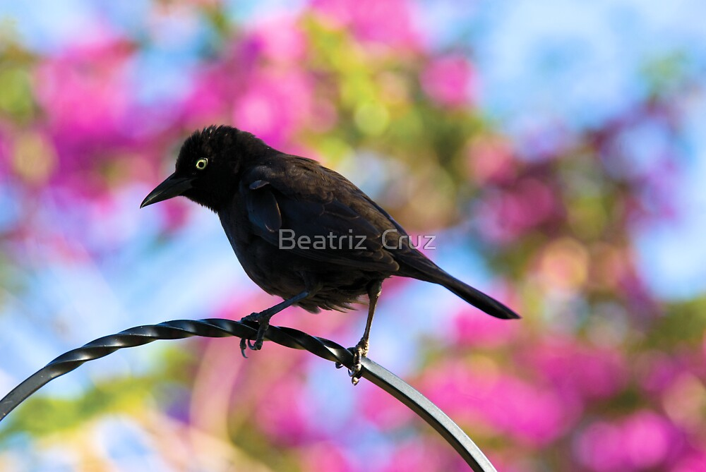 Black Bird by Beatriz  Cruz