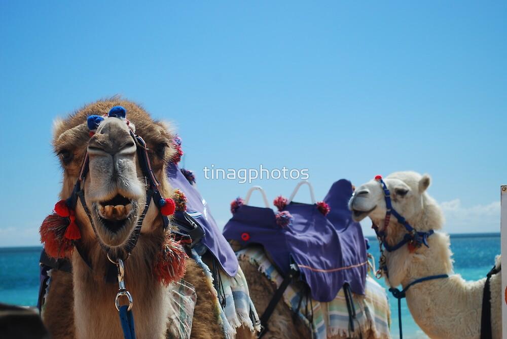 Camel Curiosity by tinagphotos