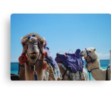 Camel Curiosity Canvas Print